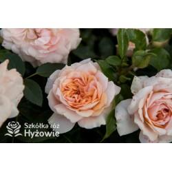Garden Of Roses®